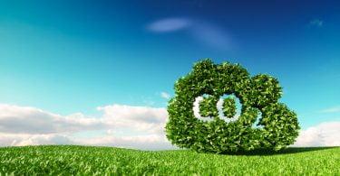 Quinta Vale D. Maria contribui para retenção de 6,5 toneladas de CO₂