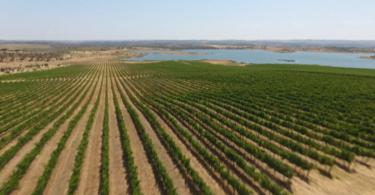 Programa de Sustentabilidade dos Vinhos do Alentejo