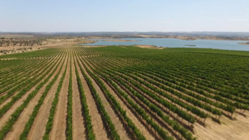 """O Programa de Sustentabilidade dos Vinhos do Alentejo (PSVA), da CVRA, anunciou a sua adesão ao grupo internacional """"4 pour 1000""""."""