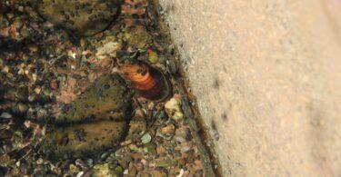 Investigador da Universidade do Minho alerta para habitats artificiais de água doce