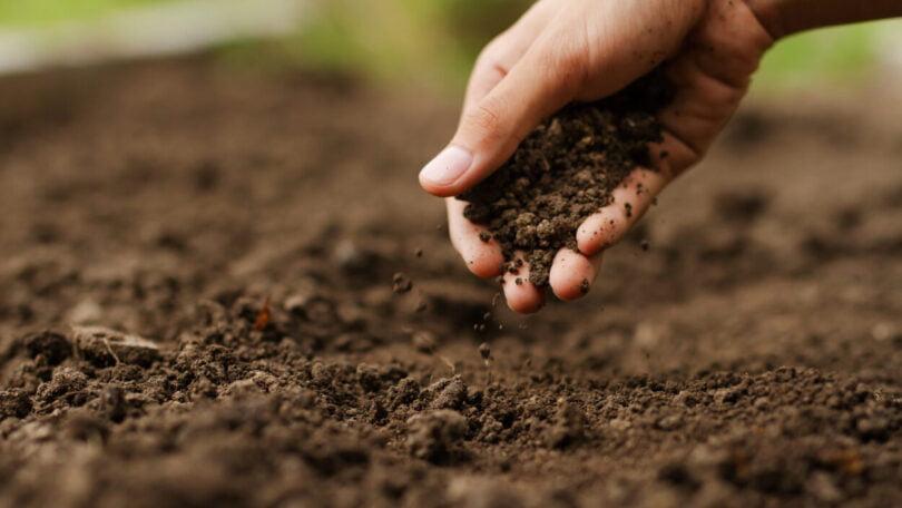 A Scheffer anunciou a adoção de um sistema agrícola regenerativo e a construção da sua própria fábrica de biopesticidas.