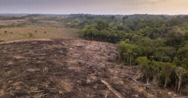 Portugal é o sexto país da União Europeia com maior consumo per capita associado à desflorestação tropical, revela o relatório da ANP/WWF.