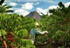 A Nestlé pretende, até 2025, que toda a sua produção de café das suas marcas seja de fontes de cultivo sustentável, tendo já alcançado 85%.