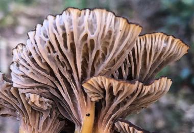 Cientistas internacionais, entre os quais uma portuguesa, apelaram para que os fungos sejam incluídos na conservação da biodiversidade.