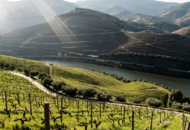 O Instituto dos Vinhos do Douro e Porto atribuiu à Quinta dos Murças o Prémio Vintage IVDP Ambiente e Sustentabilidade 2020.