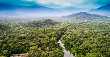 Um estudo brasileiro revela que a floresta da Amazónia está a emitir cerca de um milhão de toneladas de dióxido de carbono por ano.