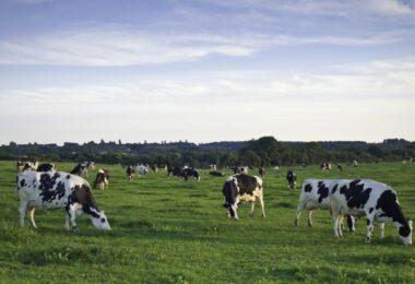Um estudo revelou que a produção global de alimentos é responsável por um terço de todos os GEE emitidos pela atividade humana.